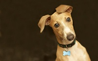 สุนัขสามารถป่วยเป็นโรควัณโรคได้หรือไม่ ?