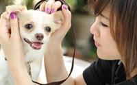 ดูแลสุนัขแบบรับผิดชอบสังคม
