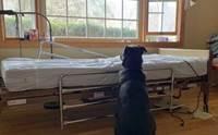เศร้า! เจ้าตูบตัวนี้นั่งข้างเตียงผู้ป่วย หวังให้เจ้านายที่จากไปกลับมา