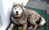 น้องหมาพันธุ์ไหนบ้างนะ? ที่มักพบปัญหาในช่วงหน้าฝน