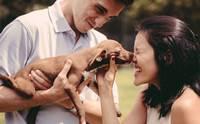 ดีต่อใจ! คู่รักปิ๊งไอเดียถ่ายพรีเวดดิ้งในศูนย์พักพิงฯ ช่วยหมาแมวมีบ้านใหม่