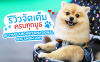 Dogilike พาตะลุย Thailand International Dog Show 2019 ตอน 2