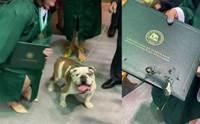 บัณฑิตสาวขอถ่ายรูปกับสุนัขประจำมหาลัย แต่สุดท้ายดันเป็นแบบนี้ ! (คลิป)