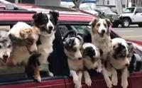 พาแก๊งน้องหมาออกไปเที่ยว บรรยากาศก็จะวุ่นๆ แบบนี้ล่ะ!