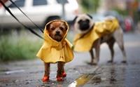 4 สถานการณ์เสี่ยง ทำน้องหมาเจ็บป่วยได้ง่ายๆ ในหน้าฝน !