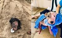 ทำได้ลงคอ! พบเจ้าตูบถูกฝังทั้งเป็นบนหาดในฮาวาย