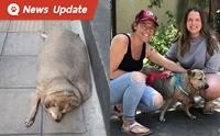 เซอร์ไพรส์! หมาอ้วนอุดมสุขหายตัวไป ที่ไหนได้ชาวเน็ตเผยรูป ถูกรับไปเลี้ยงที่แคนนาดาแล้ว