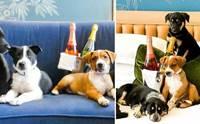น่ารัก! โรงแรมมะกันจัดบริการพิเศษปาร์ตี้ลูกสุนัขพร้อมไวน์สุดหรู
