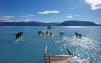กรีนแลนด์น้ำแข็งละลายหนัก อนาคตอาจไม่มีหมาลากเลื่อนให้เห็นอีกต่อไป