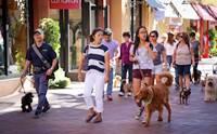 จัดอันดับ 5 สถานที่สุดชิล พาน้องหมาเที่ยวฟินแถมเข้าฟรี !