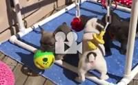 เแก๊งน้องหมาเล่นกันสนุกเลยนะ !