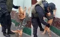 ตำรวจเปรูรับเลี้ยงตูบจรฯ ให้สวมบทเป็นผู้ร้ายโชว์ตรวจค้นอาวุธ! (คลิป)