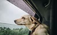 ฝนนี้ต้องระวัง! ดูแลน้องหมาอย่างไร ให้ห่างไกลจากโรคผิวหนัง