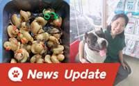 เลี้ยงหมาต้องระวัง! เผยสภาพเป็ดยาง 32 ตัวหลังออกจากท้อง #พี่เดเวล
