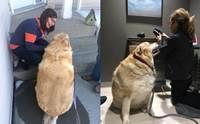 เจ้าของสั่งการุณยฆาตหมาอ้วนเกิน แต่สัตวแพทย์ทำแบบนี้แทน!