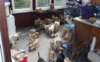 อังกฤษจับผู้เพาะพันธุ์สุนัข หลังพบหมาแมวกว่า 100 ชีวิตอยู่แออัด เจ็บป่วย!