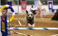 5 สุดยอดกีฬาสำหรับสุนัขน่าสนใจไปแข่งกัน