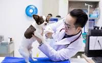 ท่องให้ขึ้นใจ ! 5 คาถาปกป้องน้องหมาจากโรคผิวหนัง