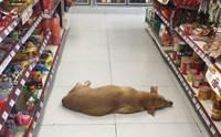 น่ารัก! ร้านสะดวกซื้อเปิดประตูต้อนรับน้องหมาในวันที่อากาศร้อนจัด