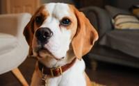5 สายพันธุ์น้องหมาที่ไม่เหมาะกับเจ้าของที่รู้ตัวว่า มีนิสัยขี้เกียจ !