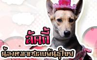 ลัคกี้ น้องหมาเซเลบพันธุ์ไทย
