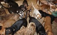 Chella หญิงสาวเพียงผู้เดียวที่ช่วยสุนัข 97 ตัวจากพายุเฮอริเคนดอเรียน!