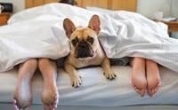 เผยการทดสอบ ให้สุนัขอยู่ในห้องนอนทำให้เจ้าของนอนหลับดีขึ้น !