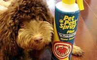 REVIEW : สเปรย์กำจัดเห็บ Pet Pest Spray Plus