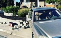 อุทาหรณ์ปล่อยน้องหมาไว้บนรถยนต์ลำพัง เข้าเกียร์ชนสนั่น !