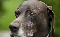 3 โรคน่ากลัวของน้องหมาที่ติดมาจาก