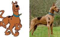 สคูบี้-ดู ครบรอบ 50 ปี! เจ้าของแห่โพสต์ภาพน้องหมาหน้าเหมือน
