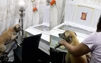 รักสุดใจ! คลิปสุนัขซื่อสัตย์ร่ำลาเจ้าของเป็นครั้งสุดท้าย