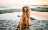 ฝนตกบ่อยต้องระวัง! สายพันธุ์น้องหมาที่มักพบปัญหาโรคผิวหนัง