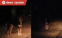 หนุ่มโพสต์ขอความช่วยเหลือ เห็นกับตาเจ้าของโยนหมาทิ้งจากรถ!!