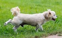 สงสัยป่ะ ทำไมน้องหมาอึแล้วต้องทำท่าเอาขาหลังเขี่ยพื้น?