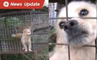 เจ้าหน้าที่บุกช่วยหมา - หมาจิ้งจอก จากฟาร์ม หวิดถูกจับถลกหนัง!!