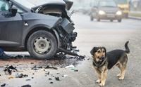 5 สถานการณ์ฉุกเฉินรีบพาหมาหาหมอด่วน ไม่ต้องรอถามโซเชียล !