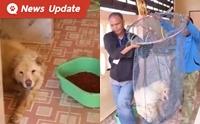 เจ้าหน้าที่ช่วยสุนัขถูกทิ้งในบ้านเช่าไร้คนดูแล ช่วยชีวิตได้ 2 ตาย 1!!