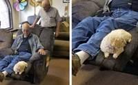 น่ารัก! คุณตาจะซื้อเก้าอี้ตัวใหม่ พกเจ้าตูบมาช่วยเช็กความนุ่มแบบนี้!