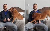 หนุ่มเล่นเกมไม่สนใจหมา ตูบเลยงัดไม้เด็ดจนชาวเน็ตอมยิ้มเป็นแถว! (คลิป)