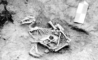 ย่อเรื่องราวของสุนัขกับมนุษย์นาน 30,000 ปี ให้จบภายใน 5 นาที
