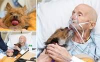 น้ำตาซึม! คุณปู่ทหารผ่านศึกขอเจอหน้าสุนัขสุดรักเป็นครั้งสุดท้าย