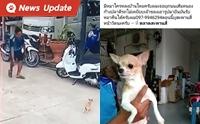 เจ้าของโวย หมาถูกขโมยจากหน้าบ้าน ด้านคนเอาไปแจง ช่วยเพราะกลัวรถชน
