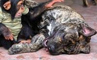 5 คู่ซี้ต่างสปีชีส์ สุนัขและเพื่อนรักต่างสายพันธุ์สุดแปลก