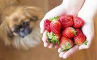 จัดอันดับ 5 สุดยอดผลไม้น้องหมากินได้ คนกินดีมีประโยชน์ !