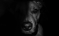 ไขความลับ สัมผัสพิเศษที่น้องหมามีมากกว่ามนุษย์