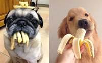 จัดอันดับ 5 สายพันธุ์น้องหมากินเก่ง ชอบทำเนียนว่า ยังไม่ได้กิน!