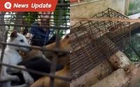 เปิดโปงการค้าเนื้อหมาในกัมพูชา 1 ปีมีหมาถูกฆ่ากว่า 3 ล้านตัว!!