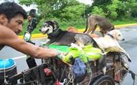 นับถือใจ! ชายเข็นรถไปทั่วเม็กซิโก เจอหมาเจ็บป่วยช่วยตลอดทาง
