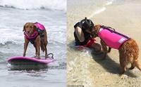 น่ารัก! โกลเด้นฯแชมป์สุนัขโต้คลื่น สอนผู้ป่วย ผู้พิการเล่นเซิร์ฟบอร์ด
